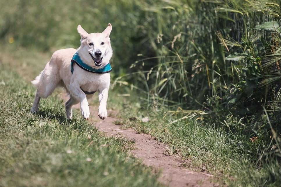 Gwizdek pomaga w treningach psa, a zwłaszcza w nauce poprawnej reakcji na komendy.