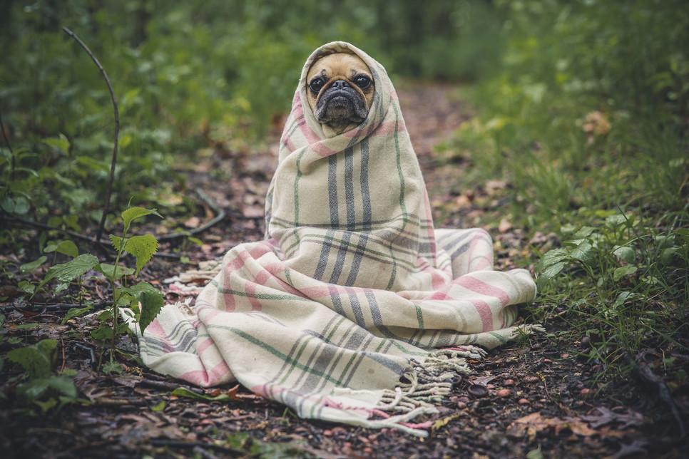 Szczepienie psa to jeden z najważniejszych obowiązków właściciela każdego czworonoga. Kiedy należy je robić?