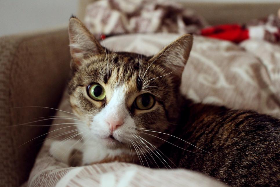 Sprawdź, jakie są przyczyny wymiotów u kota oraz co podać.