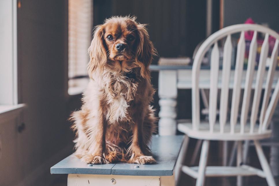 Czy mieszkanie w bloku może pozbawić możliwości posiadania psa?