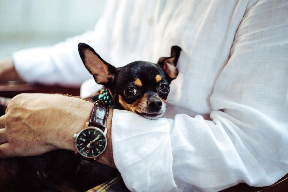 Temperatura psa powinna wynosić 37,5–39℃. Powyżej tej wartości stwierdza się gorączkę, co wymaga konsultacji lekarskiej.