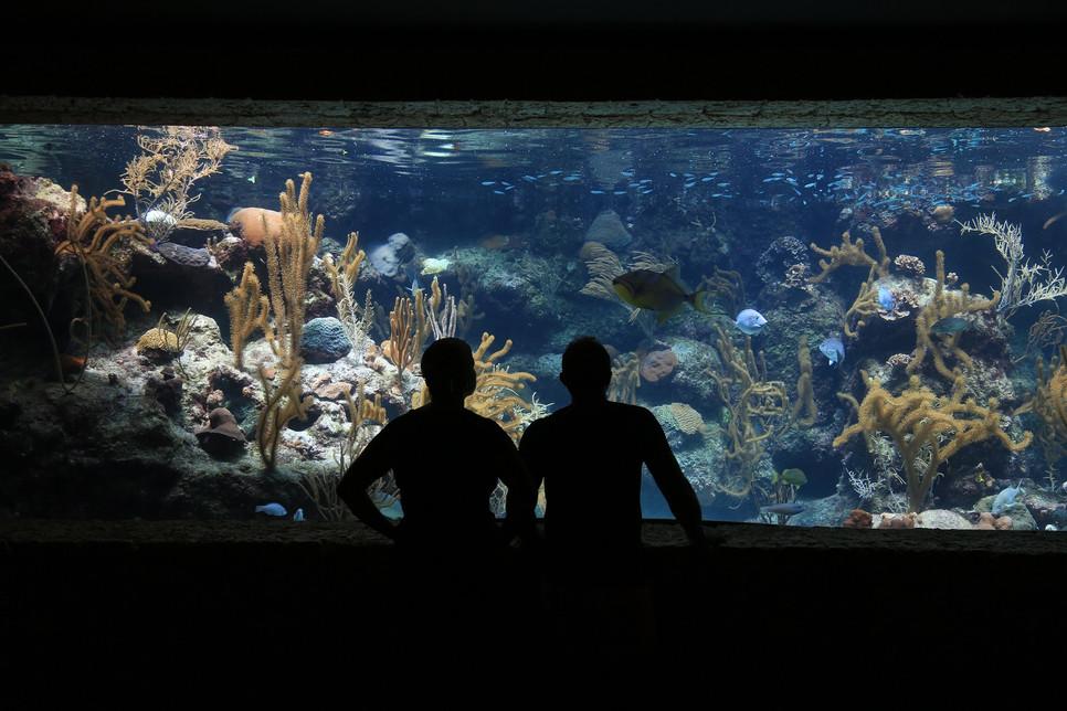 Aranżacja akwarium uwzględniać musi aspekt estetyczny, techniczny i funkcjonalny. Może być wykonana w różnych stylach.