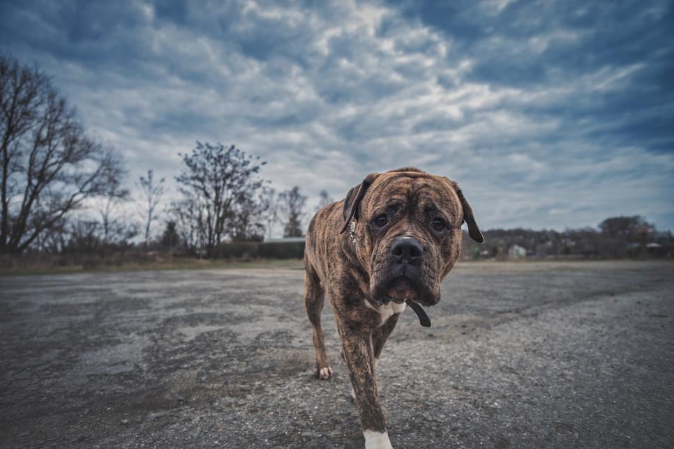 Hotel dla psów to idealne rozwiązanie, z którego warto skorzystać na czas podróży służbowej lub wakacji. Sprawdź, jak znaleźć miejsce idealne dla pupila.