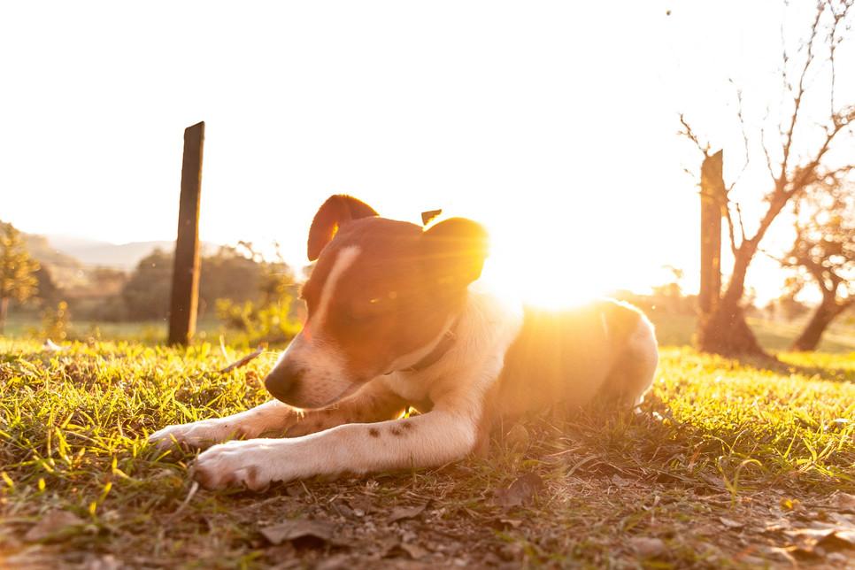 W upalne dni psu trzeba pomóc się schłodzić, pamiętając głównie o tym, żeby miał stały dostęp do wody pitnej.