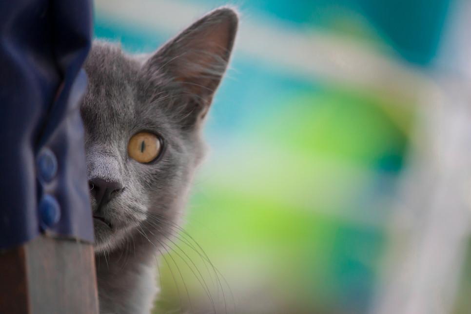 Zapalenie pęcherza u domowych kotów uznano za chorobę cywilizacyjną, ze względu na błędy żywieniowe, a także coraz mniejszą dawkę ruchu.