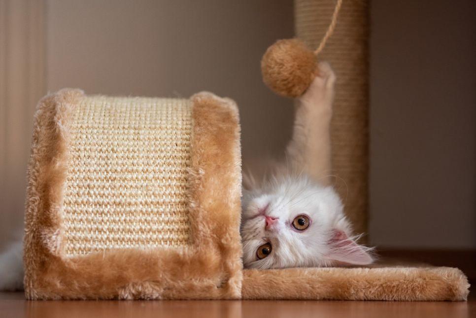 Poznaj sześć sprawdzonych patentów na domowe zabawki dla kota.