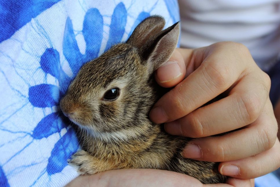Jak w praktyce wygląda adopcja królika?