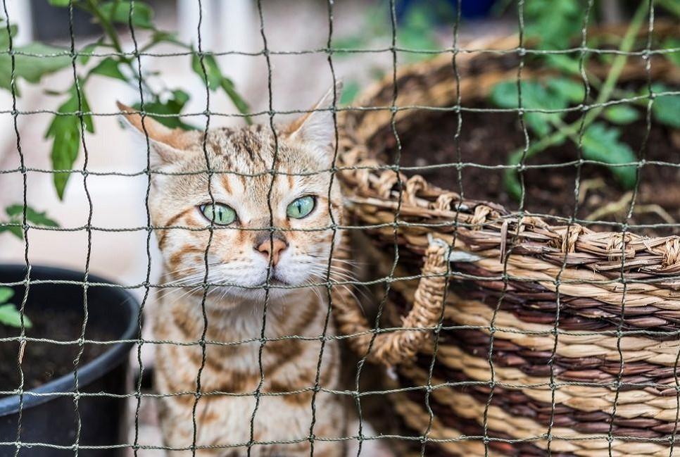 Woliera dla kota musi być bezpieczna i dostosowana do potrzeb kota.