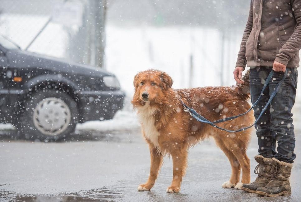 Jakie przepisy dotyczą spacerów z psami?