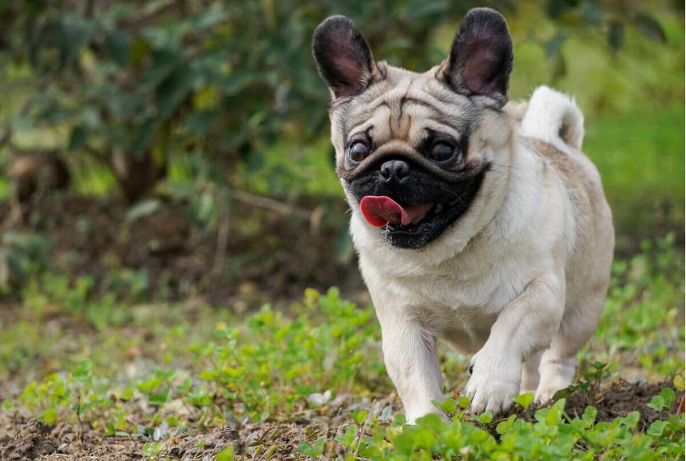 Higiena jamy ustnej u psa i kota