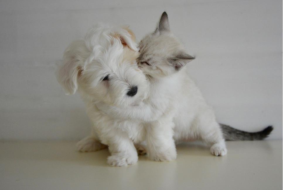 Obroża, krople czy może tabletki? Jak ochronić psa i kota przed kleszczami?