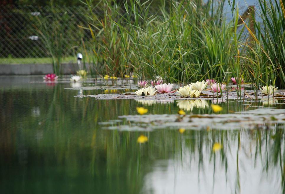 Poznaj rośliny idealne do sadzenia wokół oczka wodnego – możesz wybierać spośród krzewów, kwiatów, drzew.