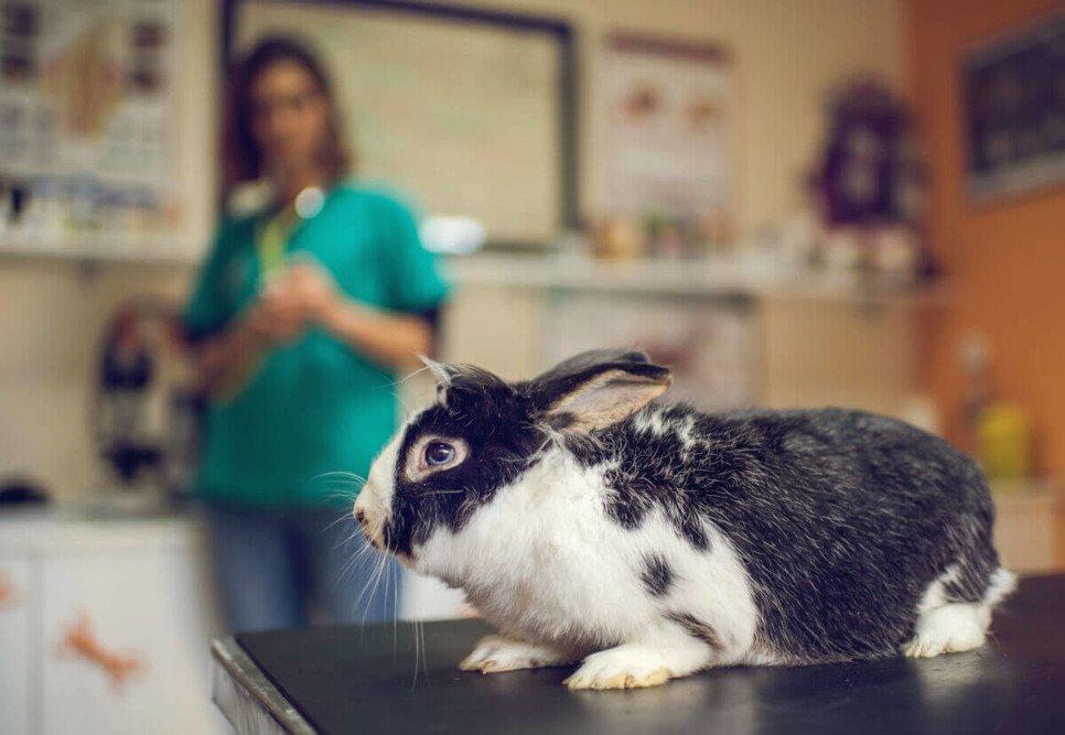 Czego królik nie powinien jeść?