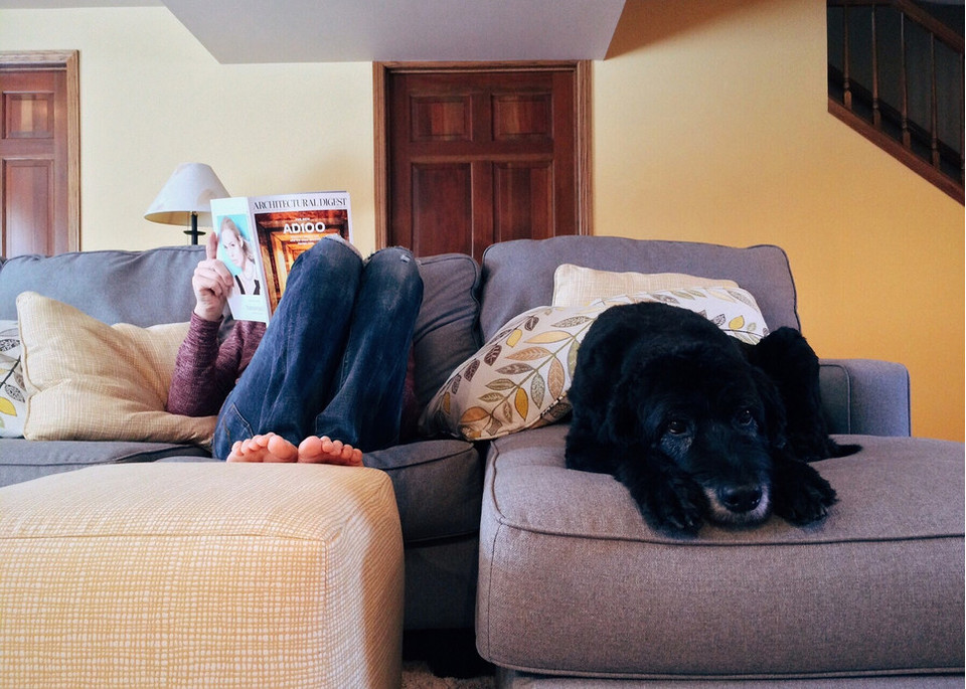 Lęk separacyjny u psa to zespół zachowań przejawiających się niepokojem w sytuacji, kiedy zwierzę zostaje samo w domu.
