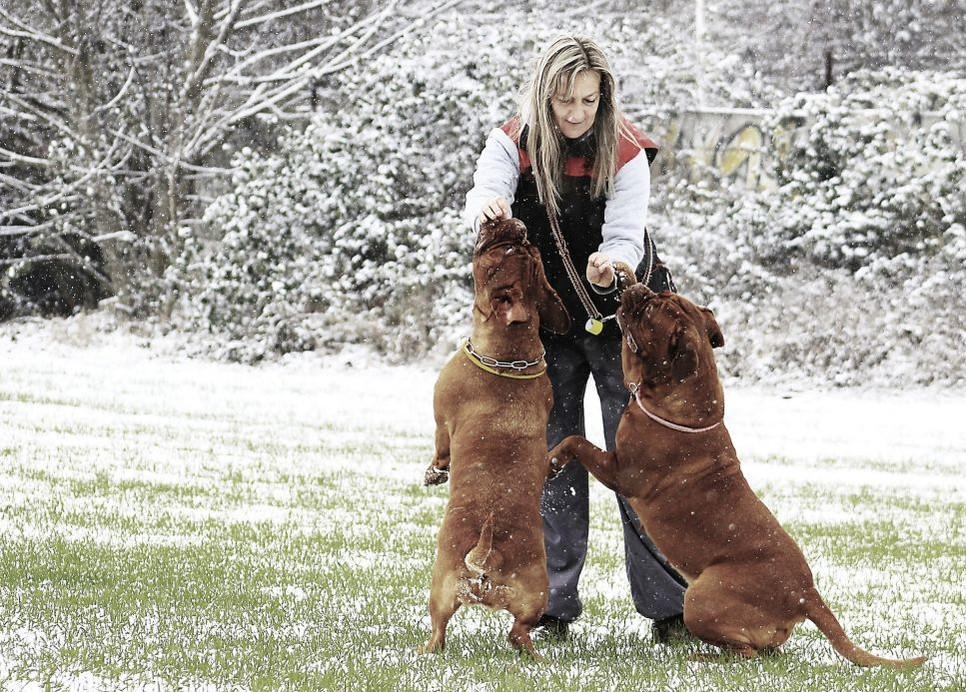 Za największe rasy psów uważa się bernardyny, wilczarzy irlandzkich i dogi niemieckie.