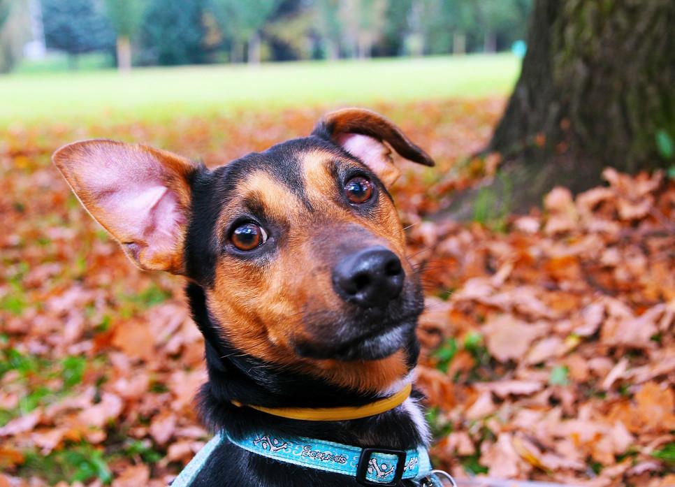 Jak czyścić psu i kotu uszy? Budowa ucha psa i kota
