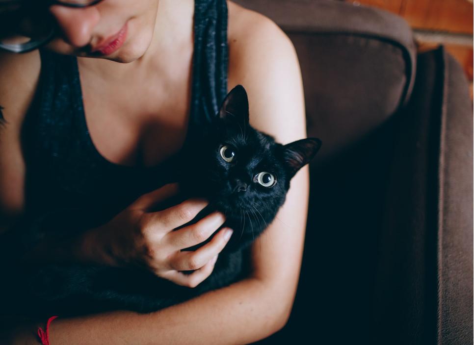 Czarne koty stanowią przedmiot wielu mitów i przesądów. Najbardziej rozpowszechniony głosi, że przynoszą pecha.