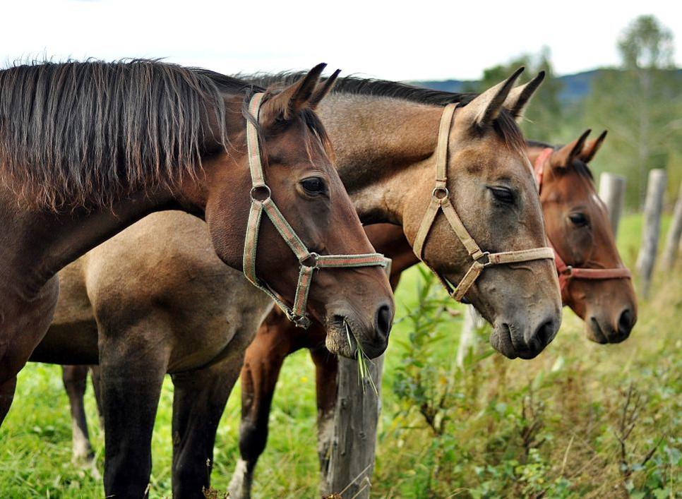 Dlaczego koń małopolski nazywane są perłą  regionu?