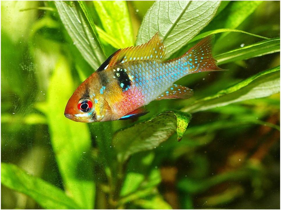 Jakie wybrać rybki do pierwszego akwarium?