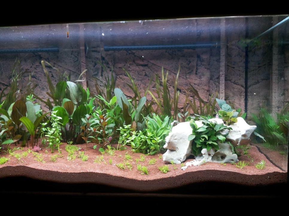 Przeczytaj artykuł i dowiedz się, jak sadzić rośliny w akwarium, a następnie stwórz swój wymarzony ogród! Zapraszamy do lektury