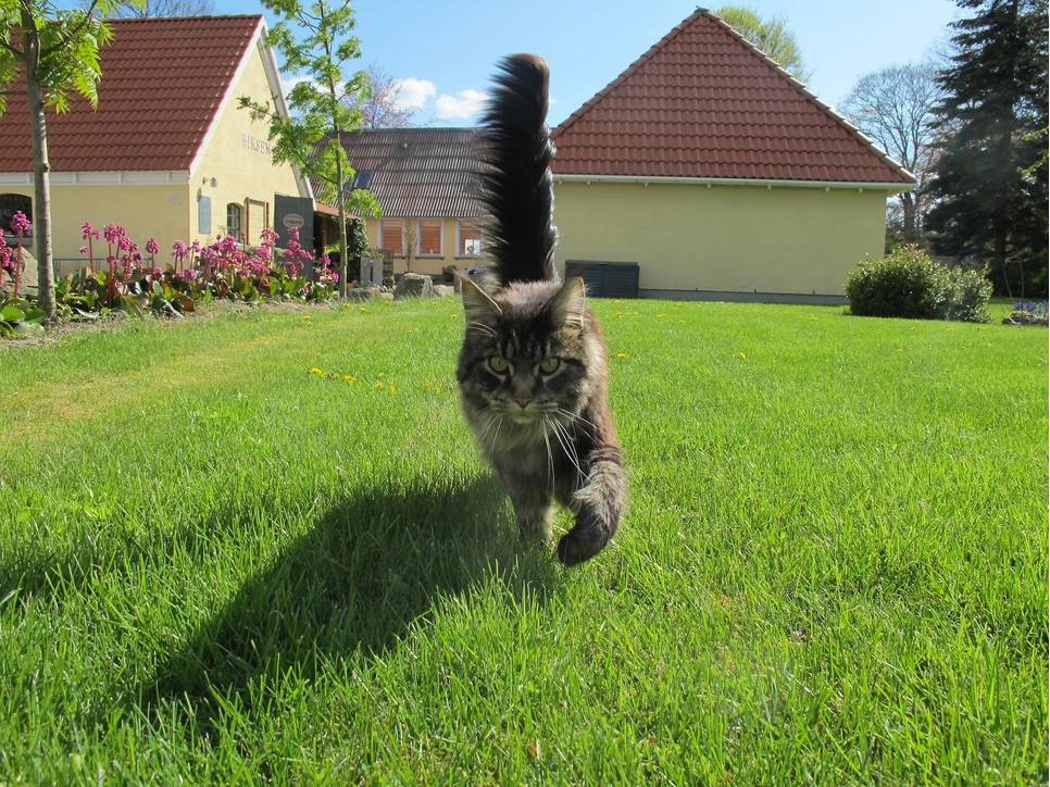 Zrozumienie swojego kota zdecydowanie poprawia wspólne relacje, ale także pomaga szybko dostrzec złe samopoczucie kota.