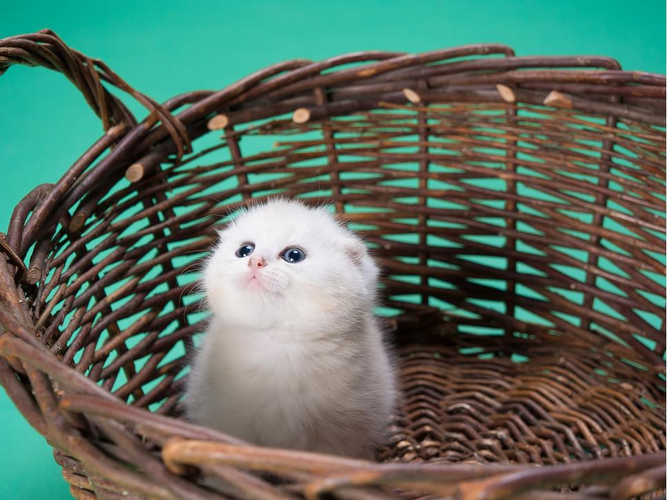 Wyprawka dla kota składa się z rzeczy, które służą komfortowi zarówno zwierzęcia, jak i opiekuna.