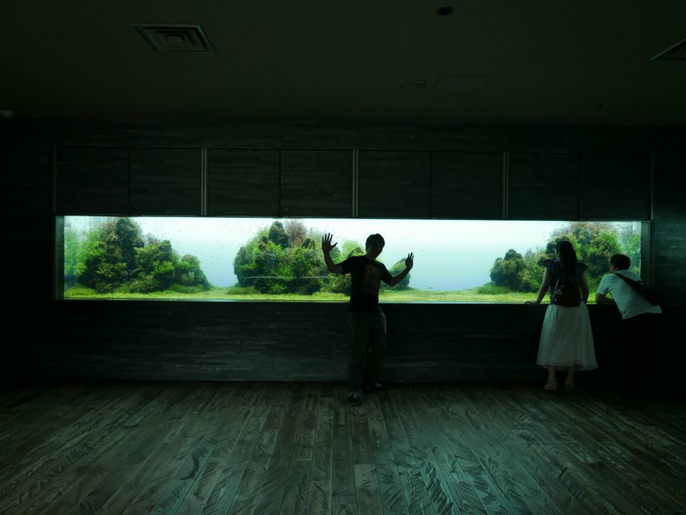 Przeczytaj artykuł i dowiedz się, jak krok po korku stworzyć akwarium w ścianie.