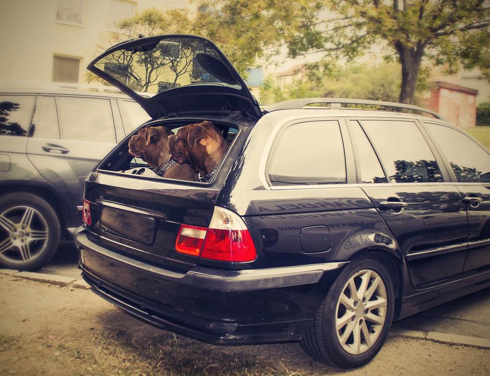 Ubezpieczenie psa jest w Polsce oferowane coraz częściej. Może zabezpieczyć przed skutkami wypadku z udziałem pupila.