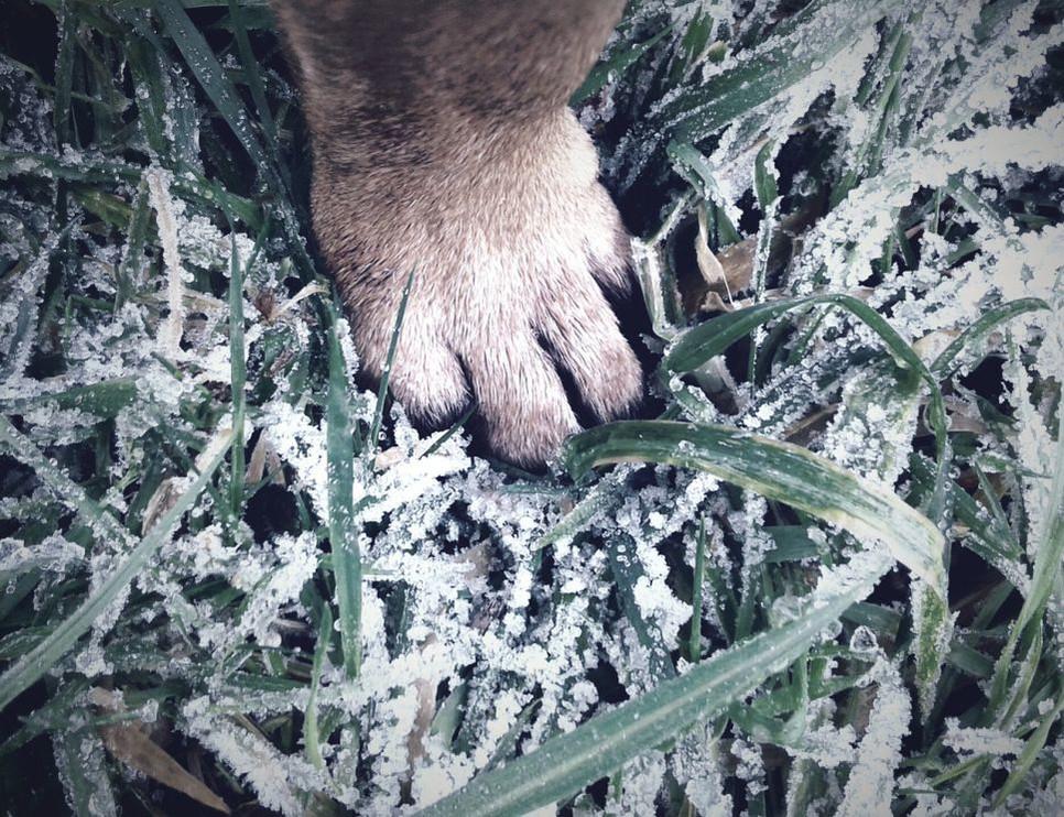Odpowiednie dbanie o łapy psa pozwoli uniknąć bolesnych pęknięć i obrzęków.