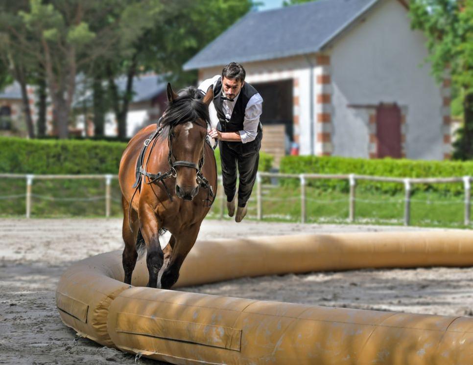 Woltyżerka konna, figury i ćwiczenia, jakie wykonuje woltyżer. Czy to rodzaj akrobatyki połączonej z gimnastyką?