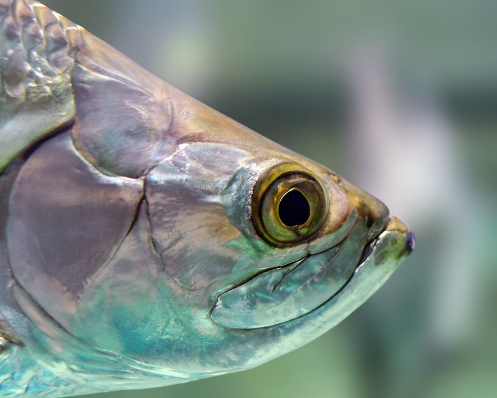 Oko ryby pozwala na widzenie pod wodą.