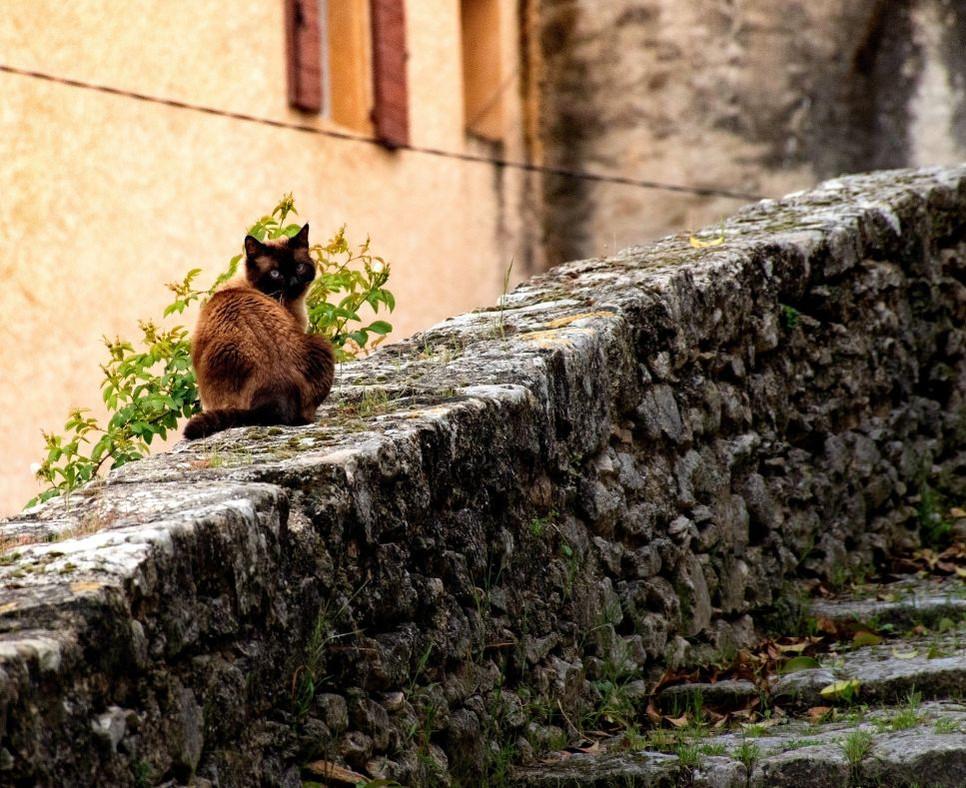 Kleszcze są niebezpiecznymi pasożytami zewnętrznymi także dla kotów.