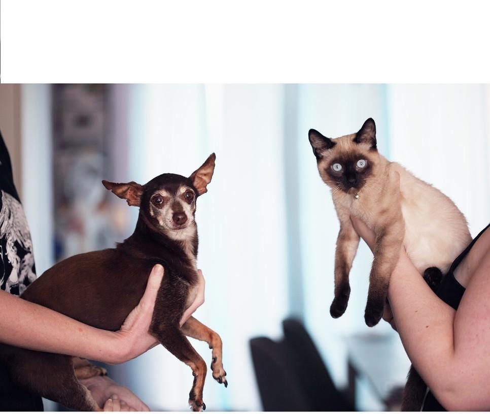 Koci czy psi behawiorysta ma niełatwe zadanie zjednoczenia ludzi i zwierząt. Do znalezienia podłoża problemu i jego rozwiązania potrzeba jest wiedza z kilku dziedzin nauki.